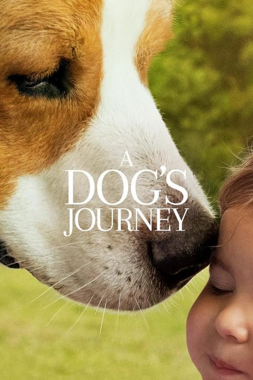 ดูหนังออนไลน์ฟรี A Dogs Journey (2019) หมา เป้าหมาย และเด็กชายของผม 2
