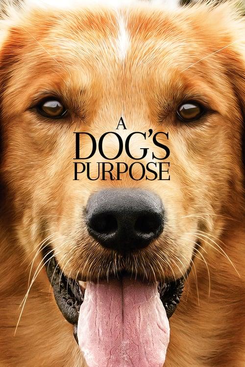 ดูหนังออนไลน์ฟรี A Dogs Purpose (2017) หมา เป้าหมาย และเด็กชายของผม