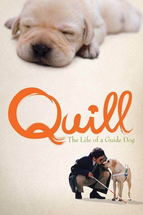 ดูหนังออนไลน์ฟรี Quill – The Life of a Guide Dog (2004) โฮ่ง (ฮับ) เจ้าตัวเนี้ยซี้ 100%