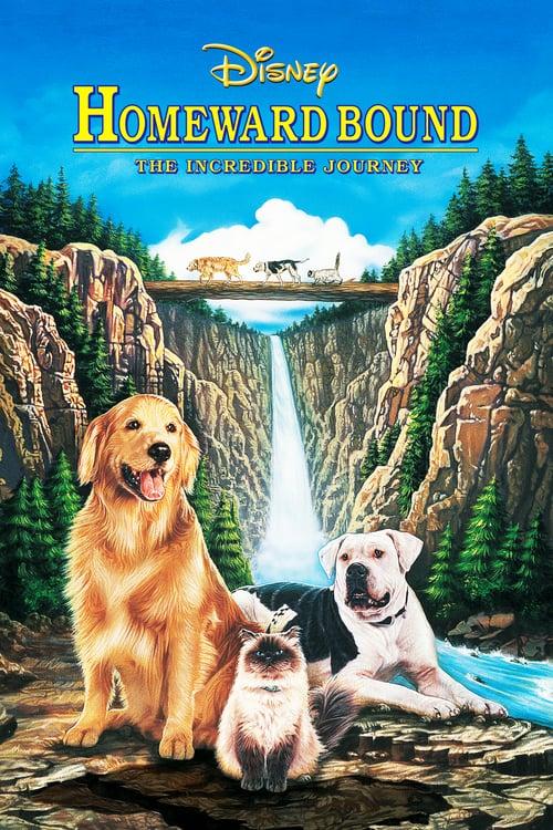 ดูหนังออนไลน์ฟรี Homeward Bound: The Incredible Journey (1993) 2 หมา 1 แมว ใครจะพรากเราไม่ได้