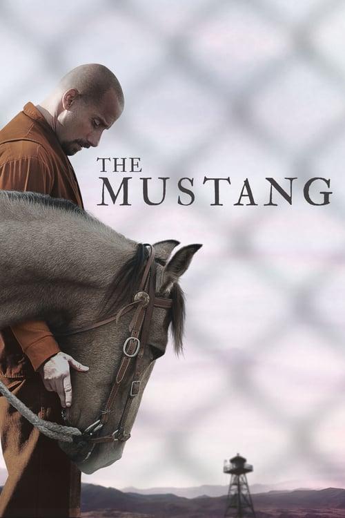 ดูหนังออนไลน์ [NETFLIX] The Mustang (2019) ม้าป่าแสนพยศ