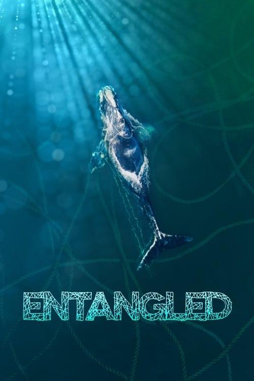 ดูหนังออนไลน์ฟรี Entangled: The Race to Save Right Whales from Extinction (2020)
